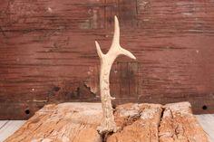 Vintage antler - Deer horn - Natural roe antler - Art supplies - Small roe antler - Antler for knife handle - Project supply