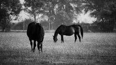 Stunning horse pictures #horses#horse#horselovers#horselove#lovinghorses#beautifulhorsepictures#horseriding#stunninghorses#beautifulhorses#loveforhorses#stallions#polopony#pony#whitehorses#equestrian#marwarihorse#marwari#thoroughbred#ponies#horsepictures#horsephotography#horsebackriding#LAPOLO Polo Horse, Beautiful Horse Pictures, Horse Training, Horse Breeds, Horse Photography, Thoroughbred, Horse Art, Equestrian, Pony