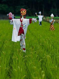 Les épouvantails sont répartis sur un champ, dissuasifs pour les oiseaux.   au Japon