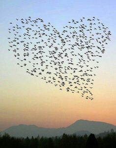 Heart - Flock of birds in Portland that is so amazing Birds In The Sky, Flock Of Birds, Flying Birds, Heart In Nature, Heart Art, Beautiful Birds, Beautiful World, Beautiful Heart Pics, Simply Beautiful