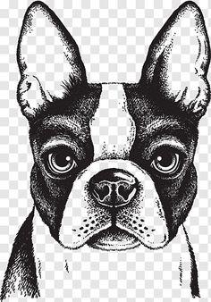 Boston Terriers, Boston Terrier Love, Perro Labrador Retriever, Retriever Puppy, Toy Bulldog, Bulldog Puppies, Puppy Drawing, Lion Dog, Fox Illustration