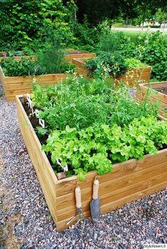 Amazing Diy Garden Pot ideas On Low Budget Terrace Garden, Garden Beds, Vegetable Garden, Indoor Garden, Small Backyard Landscaping, Landscaping Ideas, Growing Vegetables, Garden Projects, Amazing Gardens