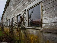 old barn at the Nisqually animal refuge  https://www.flickr.com/photos/132849904@N08/shares/U8EZo8 | estelle greenleaf's photos