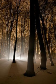 Light source in forest