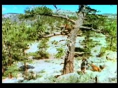 Danger: Wild Animals - YouTube