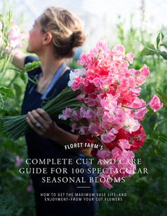 To Grow Sweet Peas The secrets to growing extra long stemmed sweet peas from Floret Flower Farm.The secrets to growing extra long stemmed sweet peas from Floret Flower Farm. Sweet Pea Flowers, Cut Flowers, Sweet Pea Bouquet, Gardening For Beginners, Gardening Tips, Container Gardening, Wicken, Growing Sweet Peas, Succession Planting