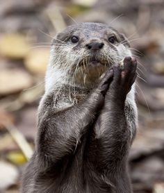 15 Adorable Otters | PawNation