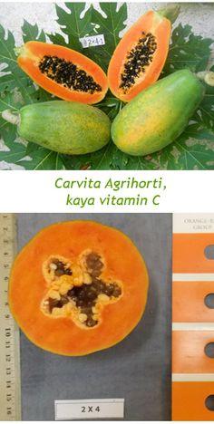 Carvita Agrihorti, Kaya Vitamin C - Info Teknologi - Berita - Balitbangtan Vitamin C, Fruit, News, Food, Beverage, Essen, Meals, Yemek, Eten
