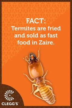 Termite Control, Pest Control Services, Fun Facts, Interesting Facts, Food, Insects, Community, Essen, Meals