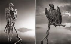 Deadly lake turns animals into statues