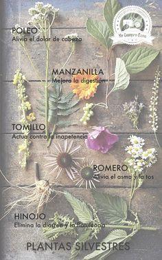 Plantas silvestres