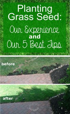 Planting Grass Seed: Our Experience and 5 Best Tips!