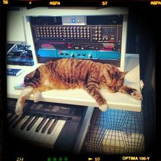 Synth Cat's break