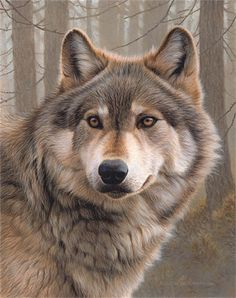 Portrait wolf illustration by Andrew Hutchinson