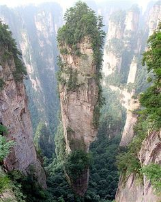Like a forest of columns festooned with pine, the approximately 3100 peaks of the Tianzi Mountains in Wulingyuan, China tower above the valley below.