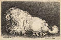 Wenceslas Hollar - A poodle, after Matham; wood engraving of a poodle 1649