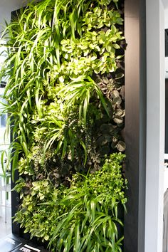 ♂ Eco friendly home deco interior vertical garden