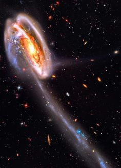 The Tadpole's Tail | In this stunning vista, based on image data from the Hubble Legacy Archive, distant galaxies form a dramatic backdrop for disrupted spiral galaxy Arp 188, the Tadpole Galaxy. The cosmic tadpole is a mere 420 million light-years distant toward the northern constellation Draco. Its eye-catching tail is about 280 thousand light-years long and features massive, bright blue star clusters.