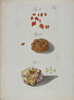 Wulfen, Franz Xavier (1791)