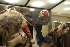 Museum Covers Up Display After Taxidermy Found to Contain Human Remains – Dusty Old Thing Museum Exhibition, Art Museum, Everson Museum, Female Lion, Carnegie Museum, Fascinating Facts, Taxidermy, Natural History, Diorama