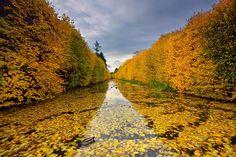 #photography Oliwa Park in Gdansk Poland | Photography by Mirek Majka…