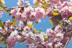 2�0�1�1� �-� �b�l�o�s�s�o�m�s�2� � - olie op doek - � �1�6�0�x�2�4�0�c�m