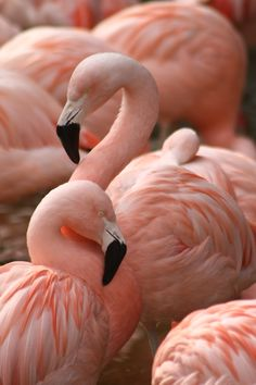 I am obsessed with flamingos at the moment... Having a renewed love of all things pink x.
