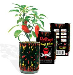 Grow your own -  Ghost chili pepper – The hottest pepper in the world