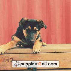 Top 50 Breeds ebook Giveaway - Puppies 4 All - 2019 Loyal Friends, Best Friends, Free Dogs, Animals Images, Puppies, Pets, Amazing, Beat Friends, Bestfriends
