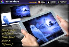 Instafusion Best App #exposure #used #double #blends #instant #solution #plus #camera #to #images #photo #phtography #picture #pics #and #uses #captionplus #birds #night #moon #moonlight   https://itunes.apple.com/app/id847293896