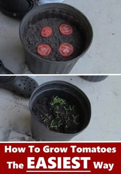 An easy way to grow your own tomatoes | 15 Vegetables Magically Regrow From Kitchen Scraps