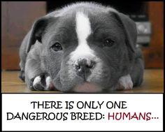 Dangerous breed?