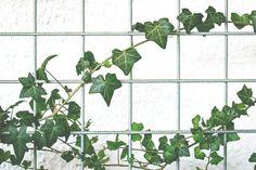 Jak na hluboký spánek? Pořiďte si do ložnice jednu z těchto 5 rostlin Farmhouse Homes, Farmhouse Design, Rustic Farmhouse, Diy Organizer, Monstera Deliciosa, Cute Dorm Rooms, Cool Rooms, Farmhouse Side Table, Office Plants