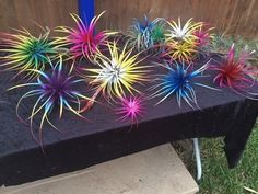4 beautiful air plants bursting with color from a floral paint used on live plants and flowers. Please purchase a heat packet for if you live in an area colder than 50 degrees. Air Plants Care, Plant Care, Fairy Garden Plants, Spanish Moss, Unusual Plants, Plants Online, Colorful Garden, Live Plants, Growing Plants