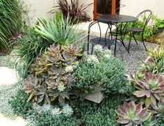 jardin de suculentas