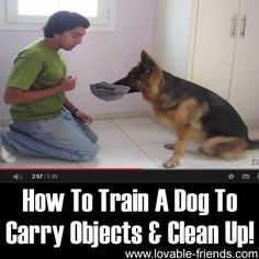 How To Train A Dog To Carry Objects & Clean Up! Attempted training time for the furry baby