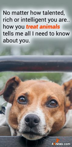 How you treat animals tells me all I need to know about you.