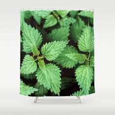 https://society6.com/product/green-1hv_shower-curtain?sku=s6-1661630p34a35v287#