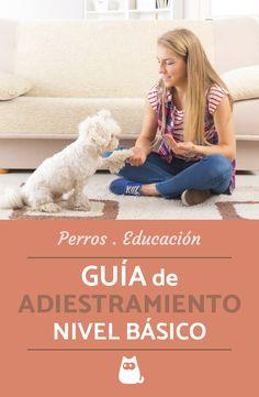 GUÍA DE ADIESTRAMIENTO canino - nivel básico #adiestramientocanino #educacioncanina #ExpertoAnimal #mascotas #perros