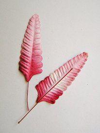 Pink Raspberry ombre ferns