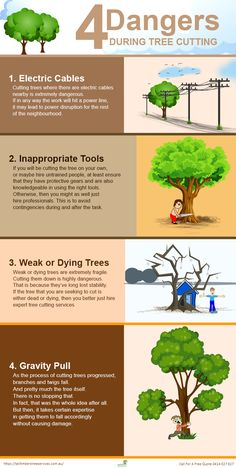 There is nothing wrong if you need to cut a tree in your yard to develop your home. But cutting trees can also bring along some dangers to you. Call For A Free Quote 0414 627 627 Tree Cutting Service, Green Pro, Tree Surgeons, Tree Care, Beautiful Gardens, Gardening Tips, Knots, Coast, Trees