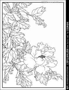 工笔画线描花卉画谱 牡丹篇