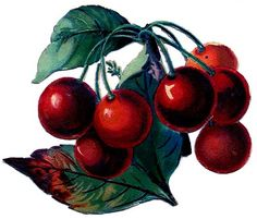 Vintage Clip Art - Cherry Bunch (from The Graphics Fairy, an amazing website that freely shares beautiful crafting ideas)