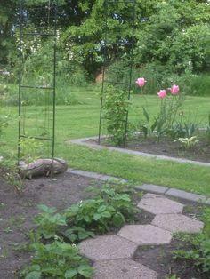 Clematis og klatre hortensier, på vej op ad rosenbuen