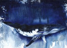 Humpback Whale  40x30  Mixed Media:color pencils, pastels, and watercolors on watercolor paper