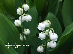 キヨミのガーデニングブログ Summer Garden, Four Seasons, Trees To Plant, Exterior, Green, Flowers, Plants, Image, Gardening
