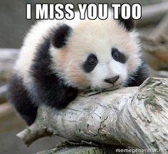 I miss you too - sad panda | Meme Generator