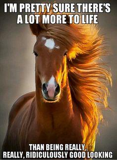 Lol Horse Humor