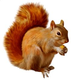 Squirrel PNG Clipart in category Animals PNG / Clipart - Transparent PNG pictures and vector rasterized Clip art images. Squirrel Clipart, Eastern Gray Squirrel, Fall Clip Art, Animal Cards, Woodland Creatures, Belle Photo, Animal Drawings, Animal Photography, Wildlife Photography