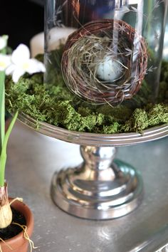A simple centerpiece display with items from #Goodwill. #cake stand #moss #nest
